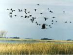 Про песню «Летят перелетные птицы»