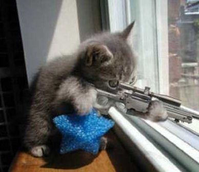 cat_rifle